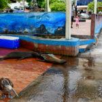 Puerto Ayora port rybacki