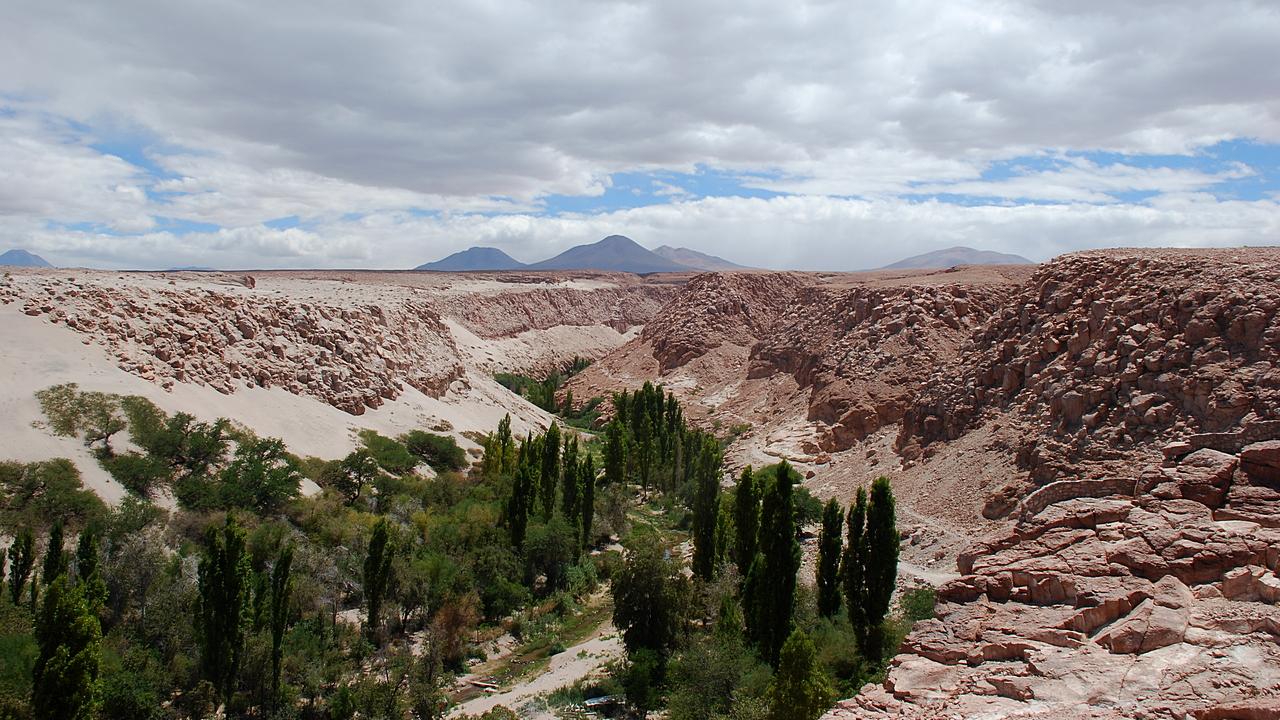 Ukryta oaza na Atacamie