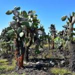 Bahia Tortuga las opuncji