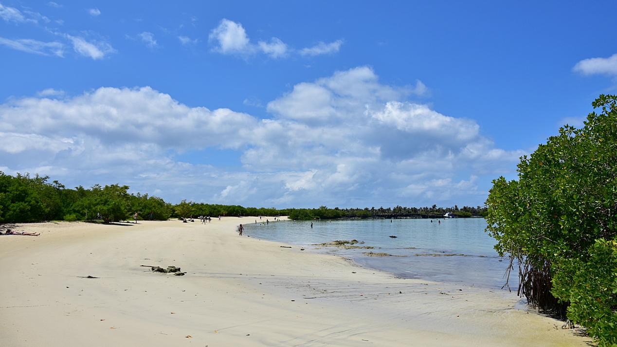 Bahia Tortuga