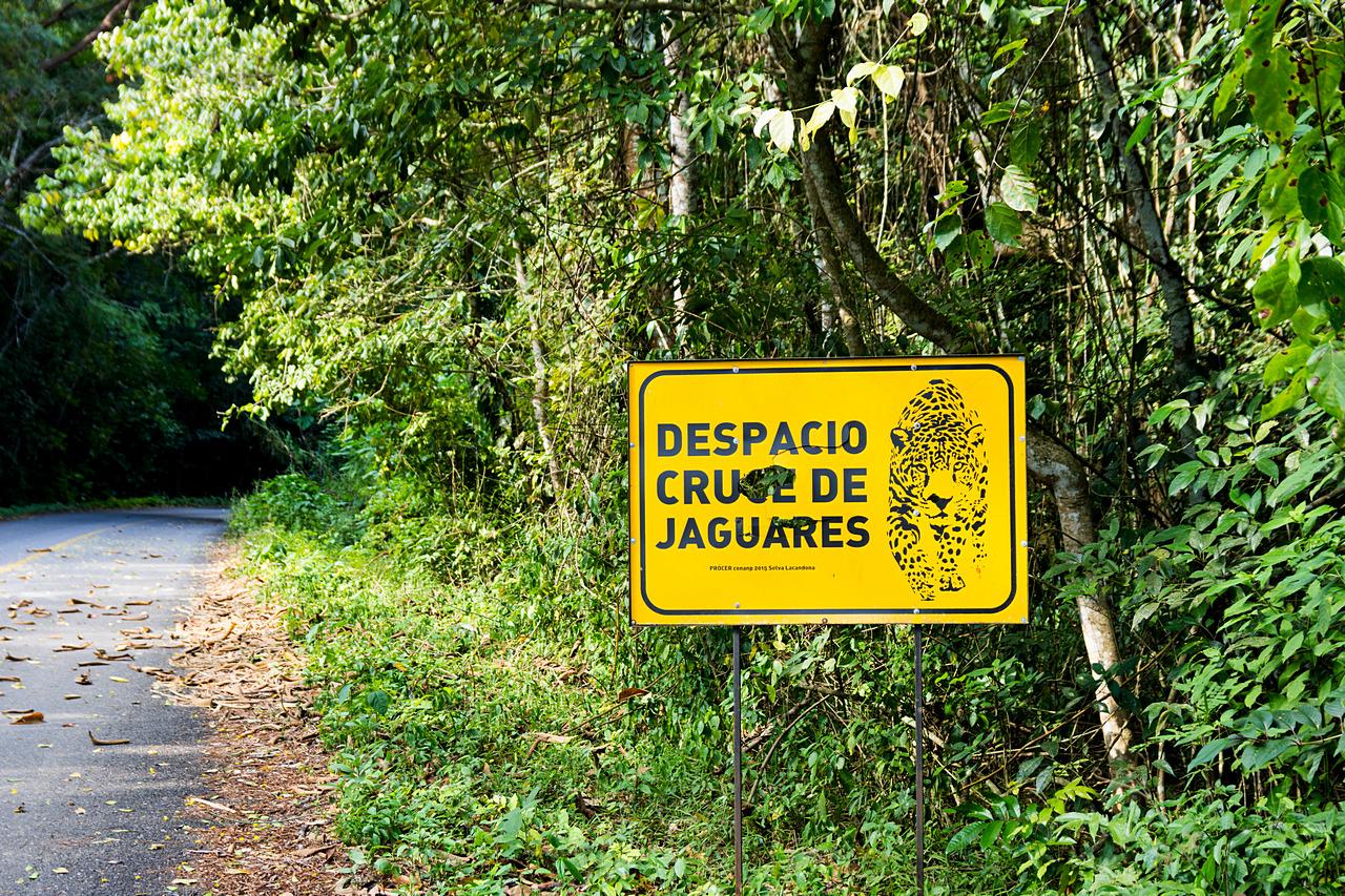 Lacandon to dzika dżungla na pograniczu Meksyku
